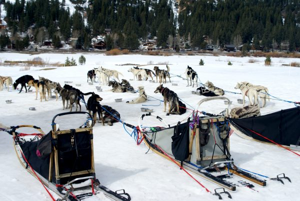 Take a dog sledding tour in Chaffee Country.