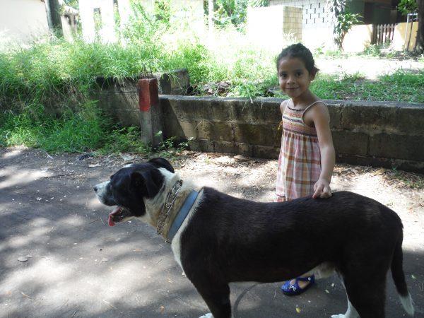 Monterrico travel with dog