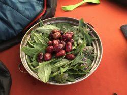Colorado bluebell salad