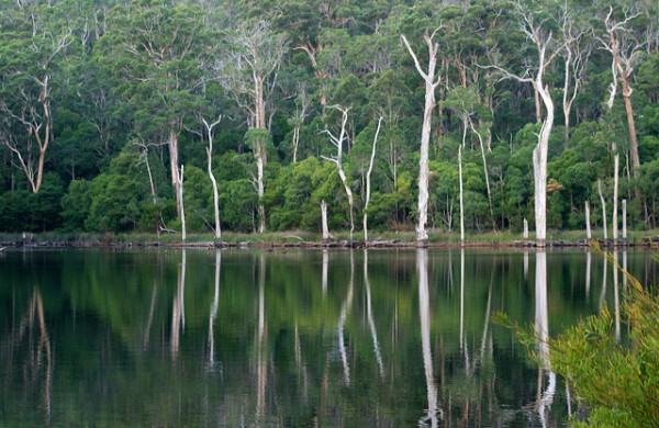 Walking tours in Australia - Karri Trees Australia