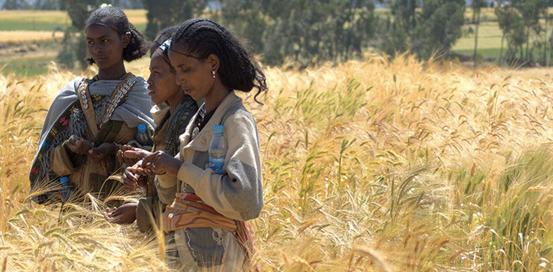 Tigrinya women around the Gheralta Mountains, Northern Ethiopia Image – Sam McManus